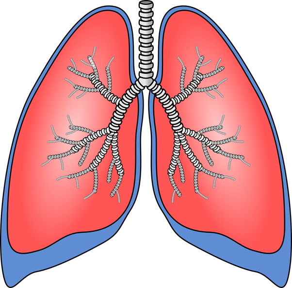 How to Keep Your Lungs Healthy: 5 Helpful Tips