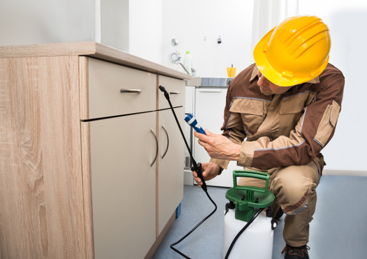 Things To Consider While Looking For Pest Control Services