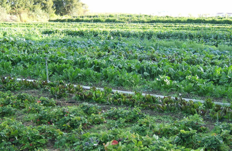 4 Important Benefits Associated With Organic Pesticides